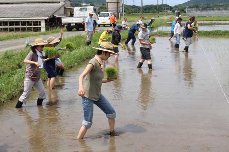酒米の新しい品種「夢吟香」の田植えをしてきたよ!【純米大吟醸山咲楽づくり】 (6)