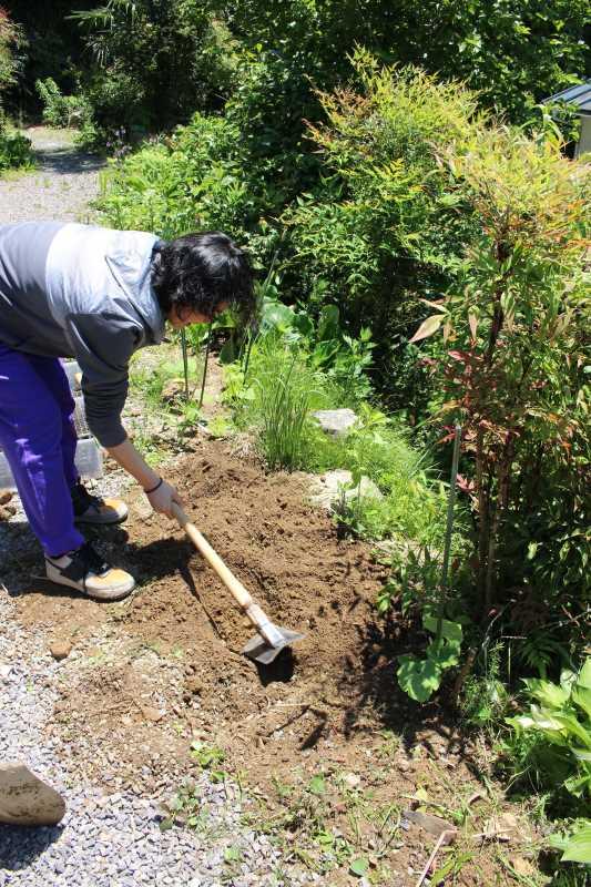 草刈りを手伝ってもらったり、耕運機を手伝ってもらったりしたおかげ (1)