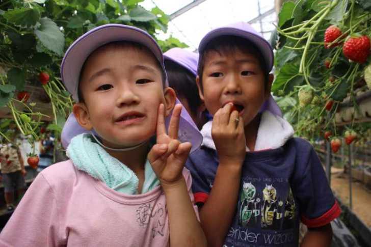 園児のイチゴ狩り体験のお手伝い【愛知県新城設楽4Hクラブ】 (5)