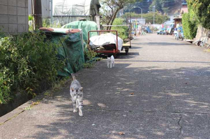 滋賀の絶対行くべきおすすめ観光スポットは「沖島」で決まり! (24)