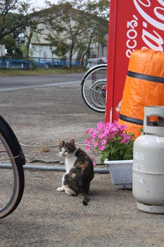 滋賀の絶対行くべきおすすめ観光スポットは「沖島」で決まり! (20)