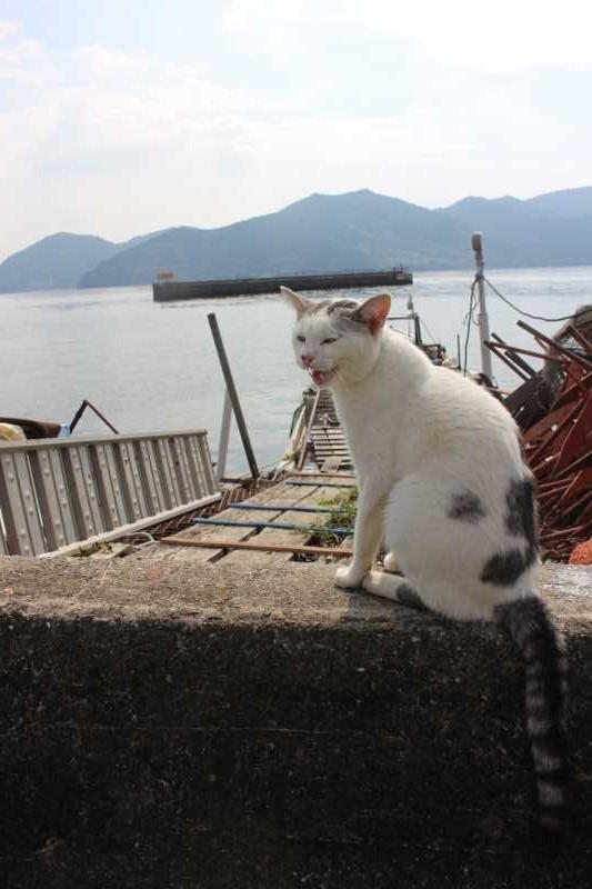 滋賀の絶対行くべきおすすめ観光スポットは「沖島」で決まり! (25)