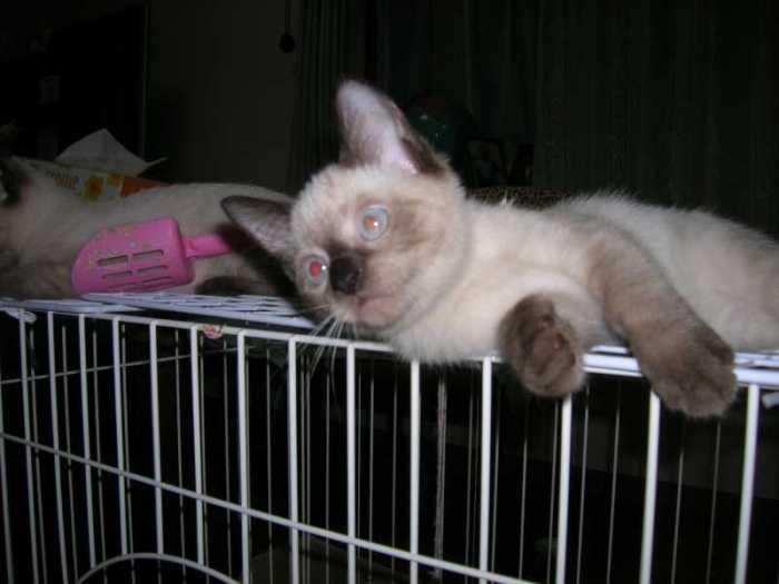 うちの仕事をしない猫「ゆず」のあられもない姿を初公開!