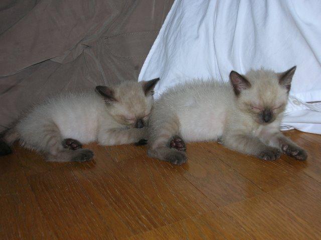 我が家のかわいい犬(パピヨン)と猫(雑種)がラインスタンプになったよ! (2)
