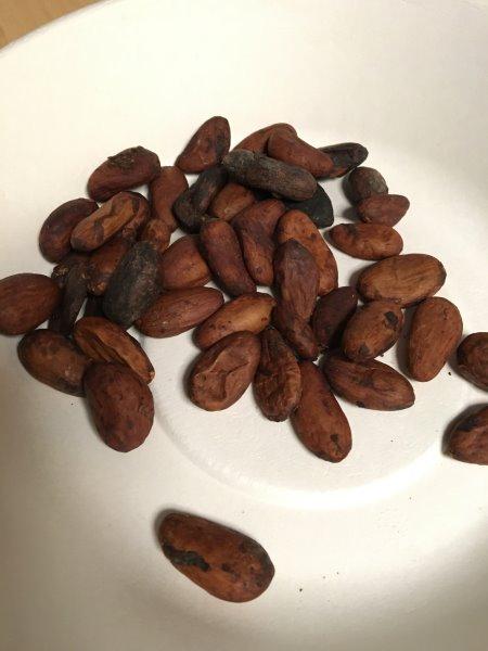 輸入したカカオ豆からチョコレートを作るワークショップを開催!真のチョコレートの作り方!! (2)