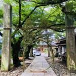 夏越しの大祓い  春日神社