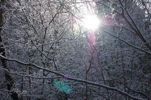 雪の高尾山6