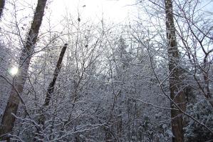 雪の高尾山7