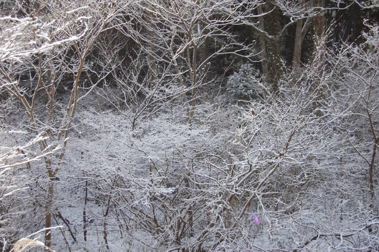 雪の高尾山1