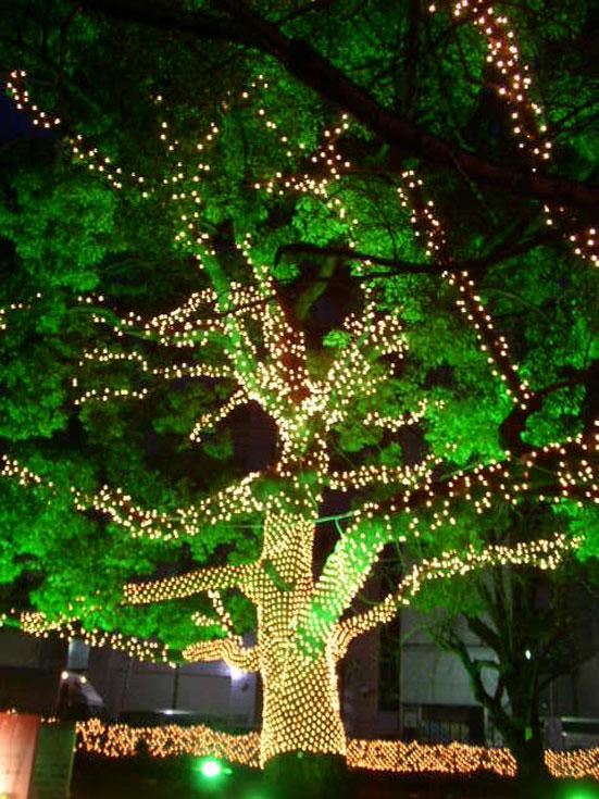 広島県旅行観光広島の夜の散歩