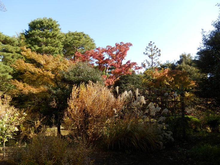 東京都旅行観光殿ヶ谷戸庭園