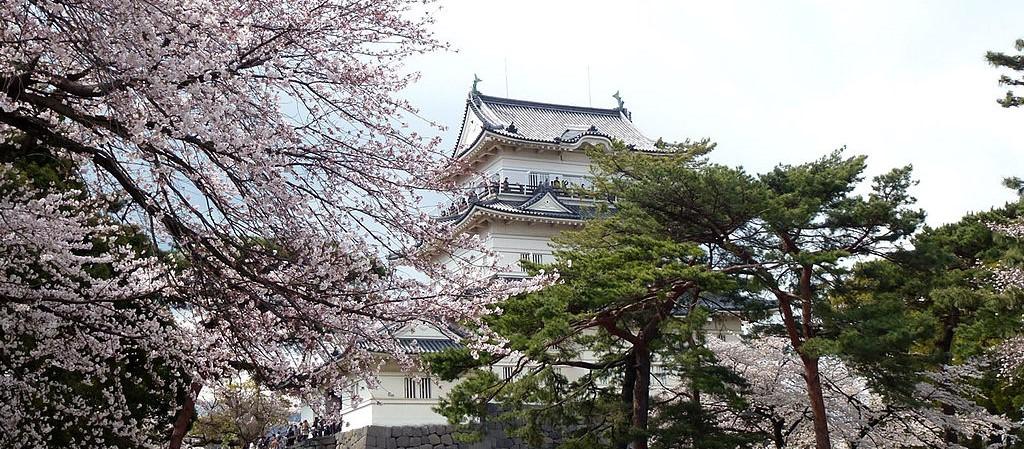 桜が美しい小田原城