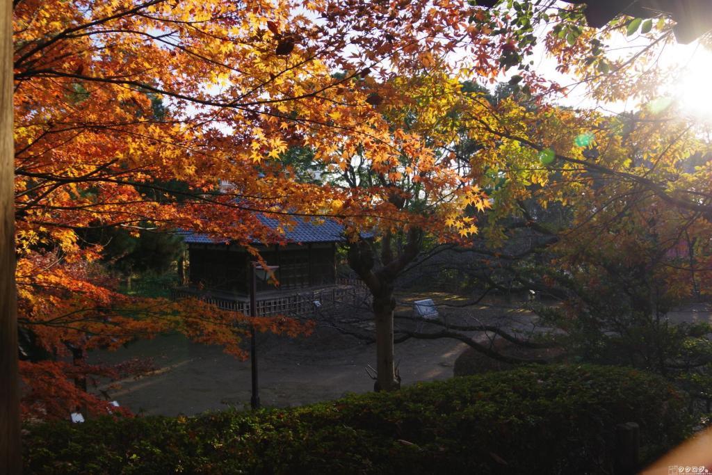 哲学堂公園の紅葉