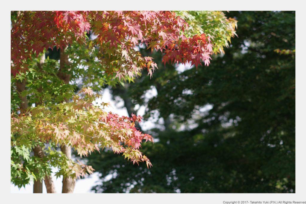 高尾山の紅葉もレトロ風に
