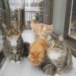猫ちゃんのためのサンルーム