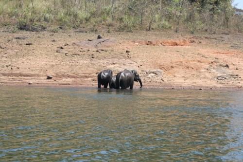 Elephant wild life