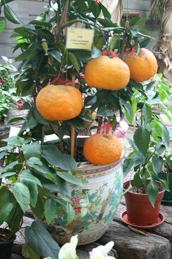 HUGE orange