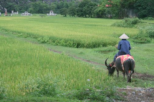 The typical Vietnamies farmer