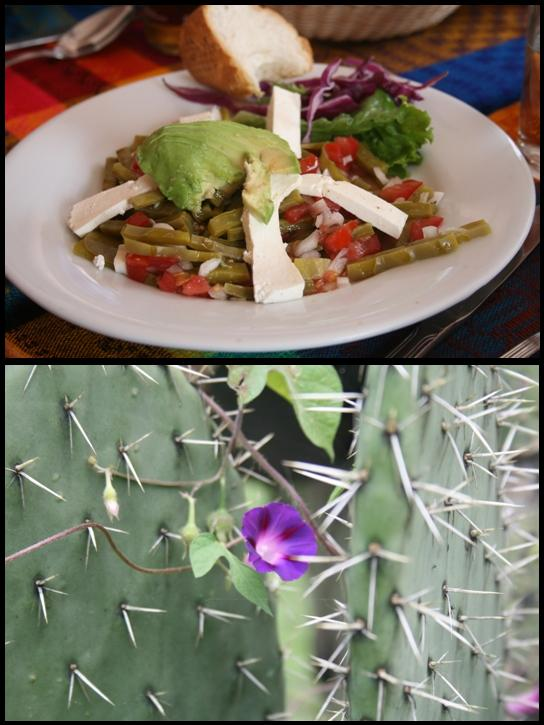 Nopal salad & cactus