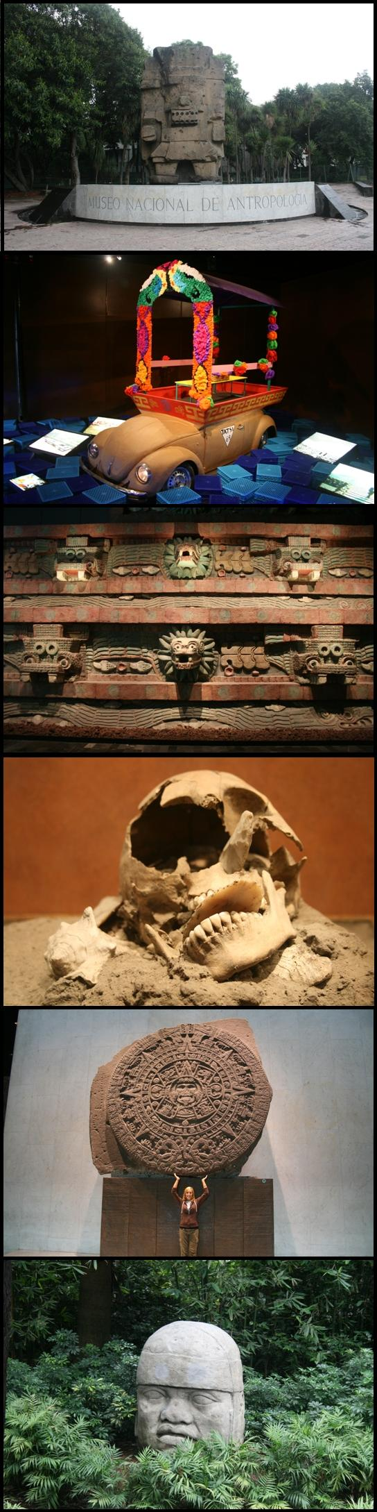 Musée d Anthropologie