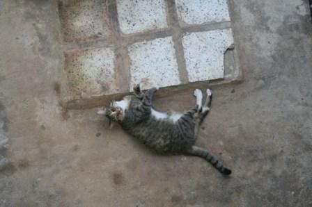 13 Lazy cat