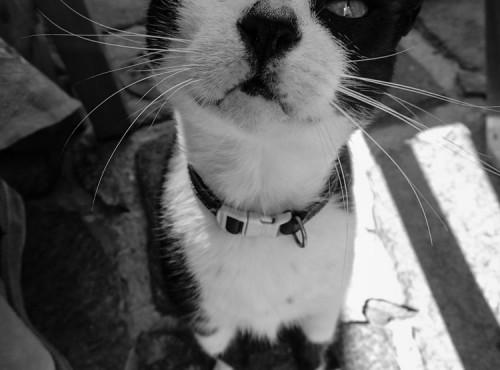 Gato Seloso