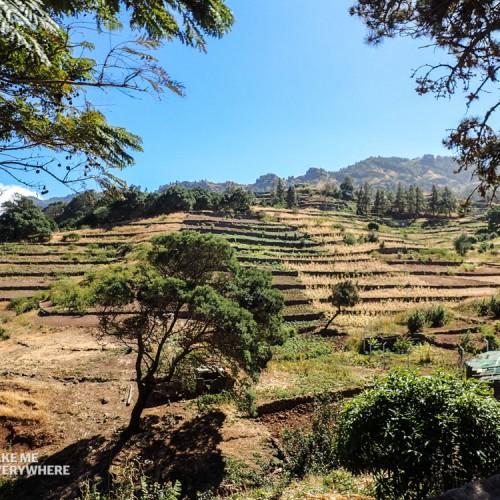 Plantation en plateau