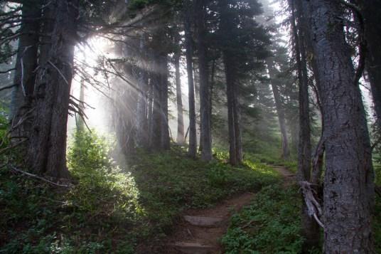 Early Morning Illumination