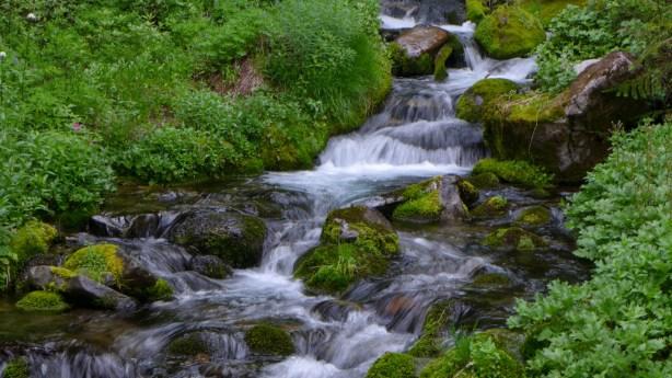 Meandering Creek in Seattle Park