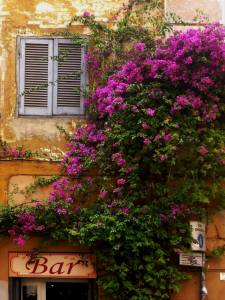 flowers and bar sign in trastevere