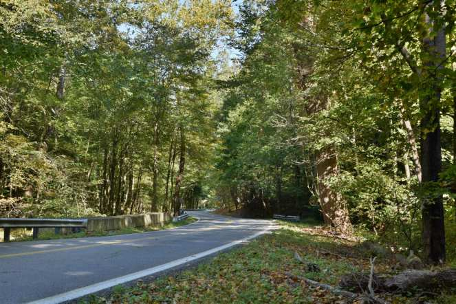 An empty back road weaves through a lush green forest streaked through by the mid-day sun