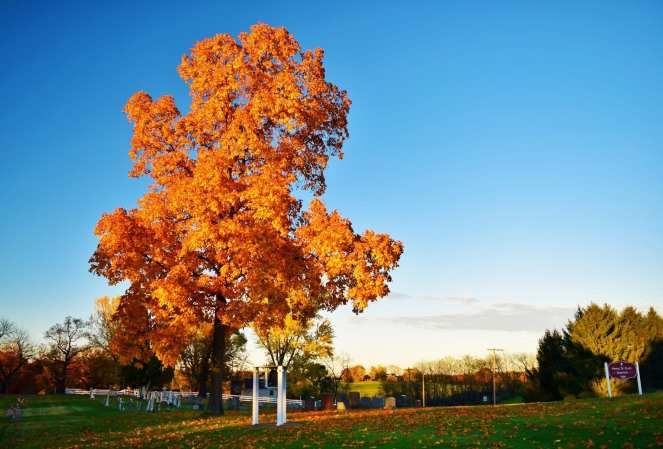 fall colors orange leaves
