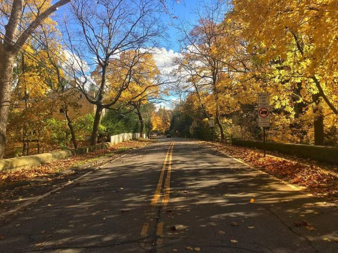 Bright colorful trees display brilliant fall colors on both sides of this back road with a few orange and gold leaves scattered by the wind