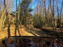 Bright golden sunlight streams across this unpaved forest service road in the Pennsylvania gamelands