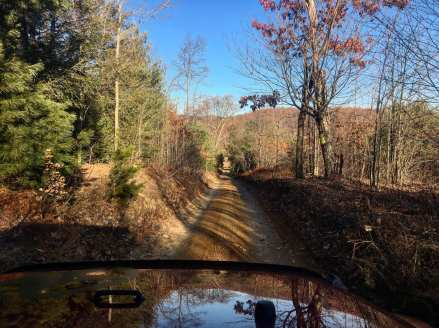 Evergreen and deciduous trees line a dirt road running through Pennsylvania hunting land