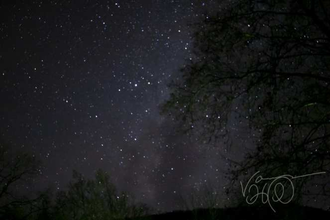 Trees in Savage River State Forest Maryland create silhouettes in front of the stars and Milky Way