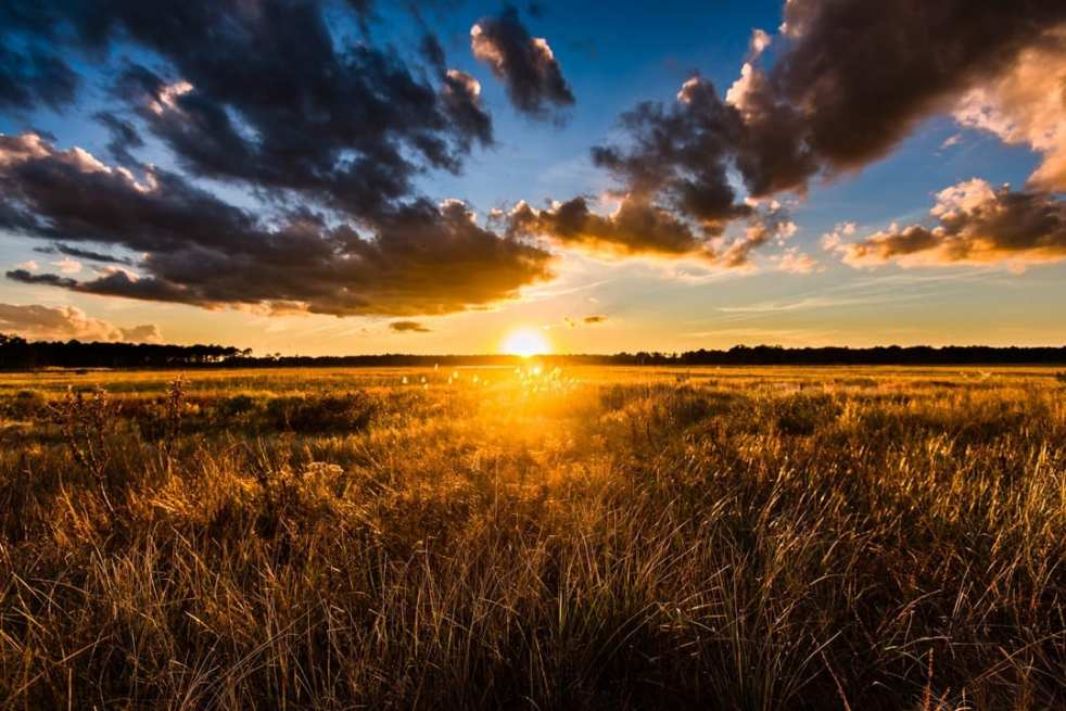 A brilliant golden sunset creates a beautiful warmth on a wild field of hay and grass under a blue cloudy sky on Big Stone Beach Road near Milford Delaware