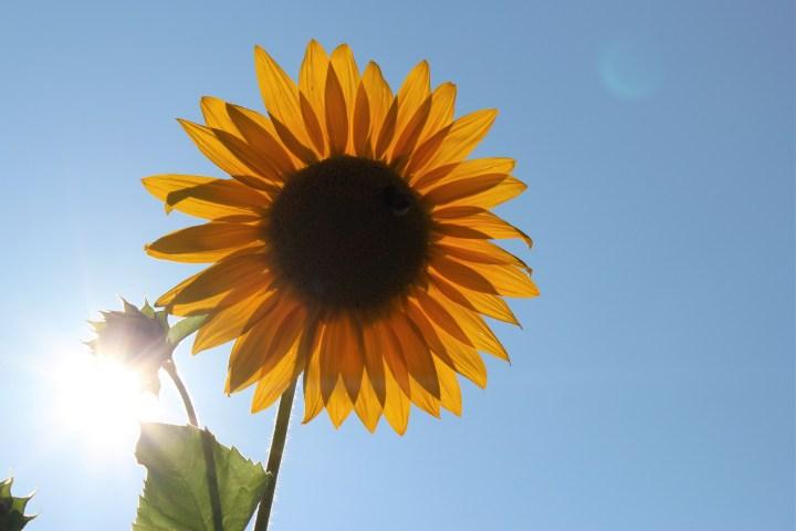 Vitamin D – lass die Sonne rein
