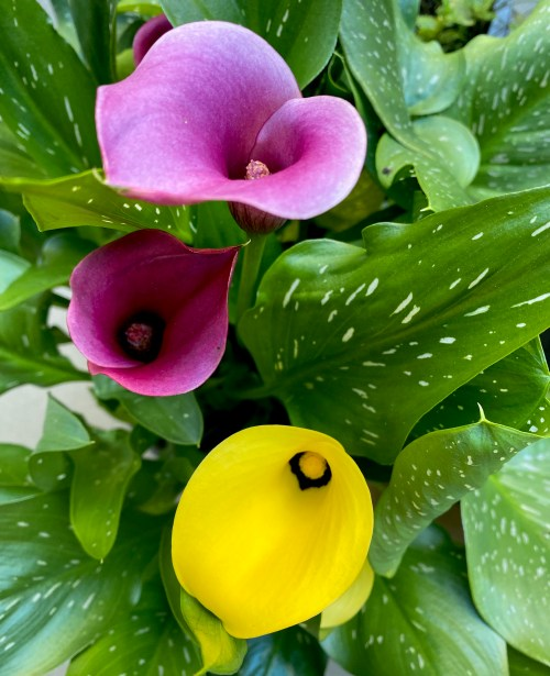 Meine Blumen in meinem Garten im Oktober für dich