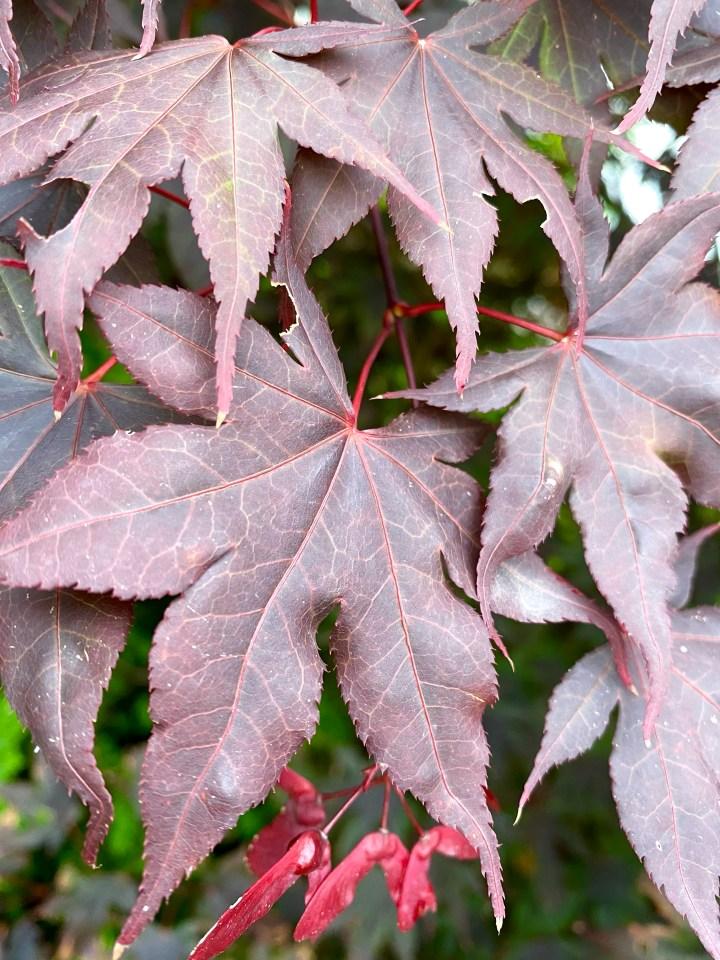 Farbenfroh und Fasten im Herbst