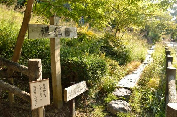 東山動植物園 湿地園