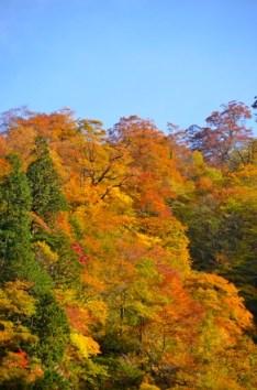 冠山 林道 紅葉