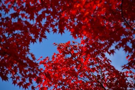 香嵐渓 紅葉