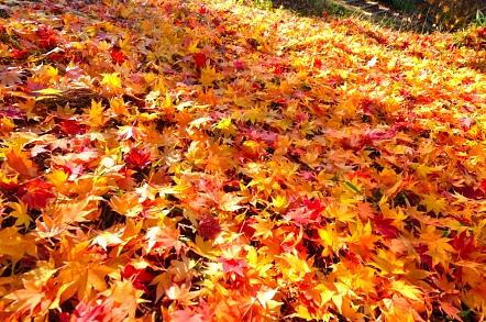 天竜峡 紅葉