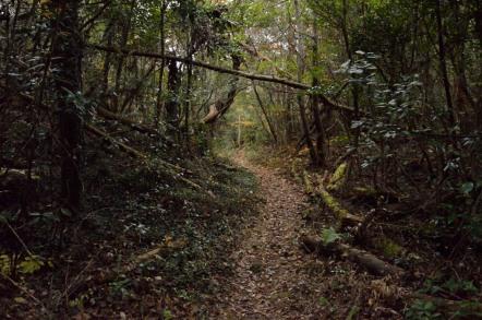 継鹿尾山 登山道