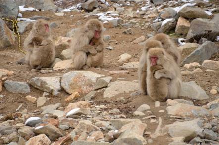 地獄谷野猿公苑 サル