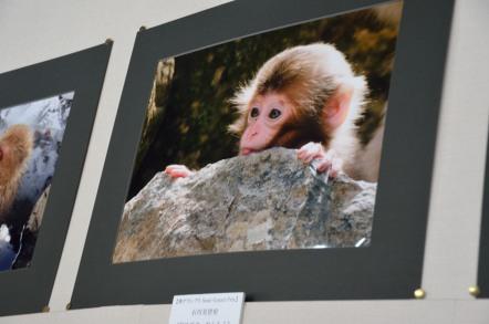 地獄谷野猿公苑 写真コンテスト