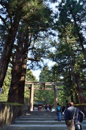 日光東照宮 杉の木