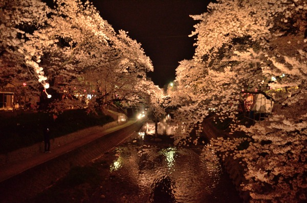 五条川 桜祭り ライトアップ