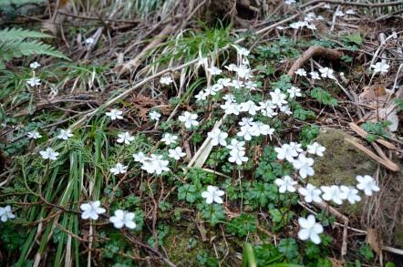 白草山 お花